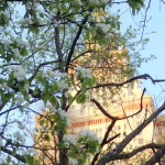 В городе моем.  Москва цветущая. У Главного здания МГУ, 30 апреля 2016.