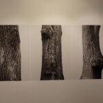 """Фотобиеннале """"Мода и стиль в фотографии- 2015""""  на Гоголевском, 10 проект """"Не (свое) временное) .Федор Шклярук. """"Дубы"""""""